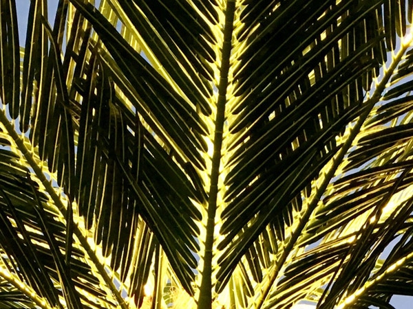 led palm tree hire