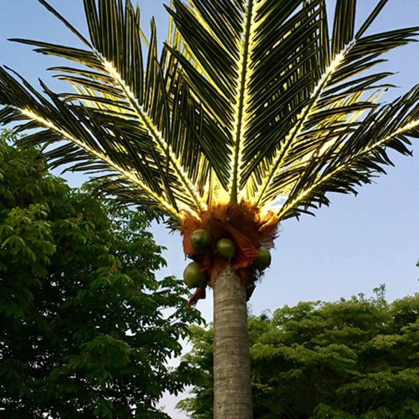 LED Palm Trees from Twilight Trees Living where you can bring Twilight Tree magic home including our artificial LED trees and garden party accessories. Click to find out more.