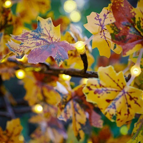 maple led tree hire