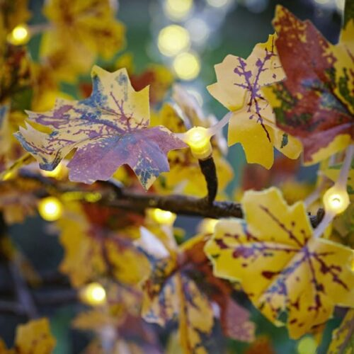Autumnal LED Maple Tree to buy or hire from Twilight Trees. You can also buy a selection of our LED Trees via Twilight Living where you can bring Twilight Tree magic home. Click to find out more.