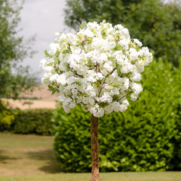 Hire white blossom pom trees by Twilight Trees