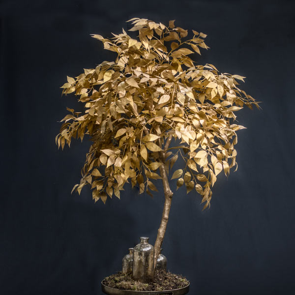 Hire gold leaf trees by Twilight Trees