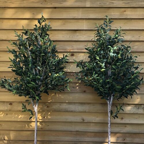 Medium Faux Olive Trees to buy or hire from Twilight Living where you can bring Twilight Tree magic home. From artificial trees to our amazing biophilia design products. Click to find out more.