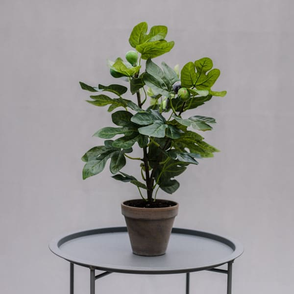 Small faux fig tree to buy or hire from Twilight Living where you can bring Twilight Tree magic home. From artificial trees to our amazing biophilia design products. Click to find out more.