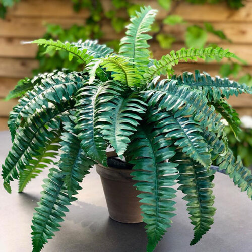 Medium faux fern in a terracotta pot to buy or hire from Twilight Living where you can bring Twilight Tree magic home. From artificial trees to our amazing biophilia design products. Click to find out more.
