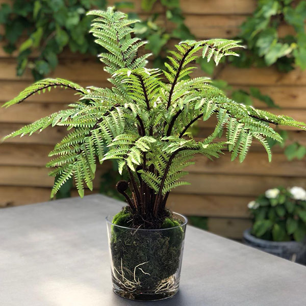 Faux Boston fern in glass pot to buy or hire from Twilight Living where you can bring Twilight Tree magic home. From artificial trees to our amazing biophilia design products. Click to find out more.