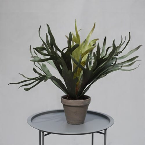 Staghorn faux plant to buy or hire from Twilight Living where you can bring Twilight Tree magic home. From artificial trees to our amazing biophilia design products. Click to find out more.