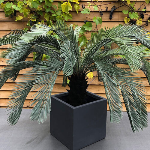 Faux palm plant to buy or hire from Twilight Living where you can bring Twilight Tree magic home. From artificial trees to our amazing biophilia design products. Click to find out more.
