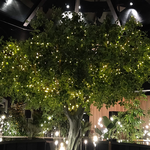 Hire large faux green tree with lights