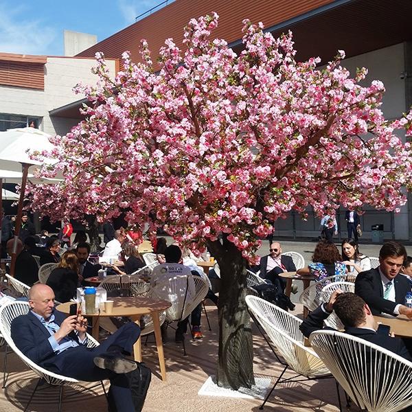 Grande pink blossom tree decorating a plaza
