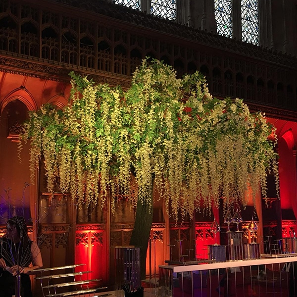 Hire large wisteria trees for events