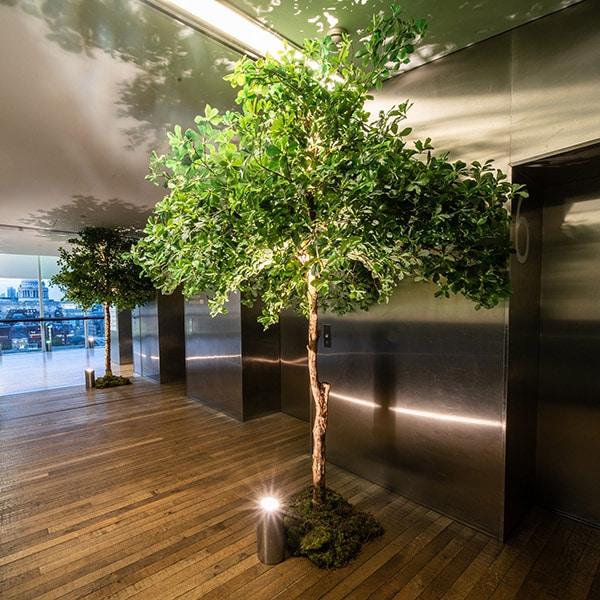 Hire Green Mid TIG tree