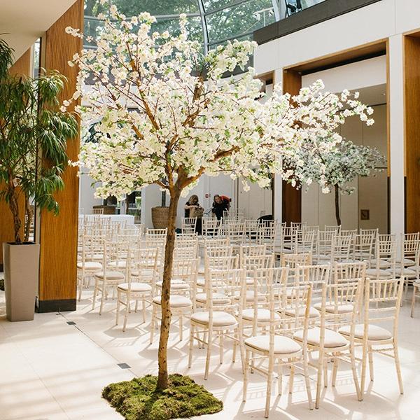 Hire wedding trees - Japanese white blossom trees