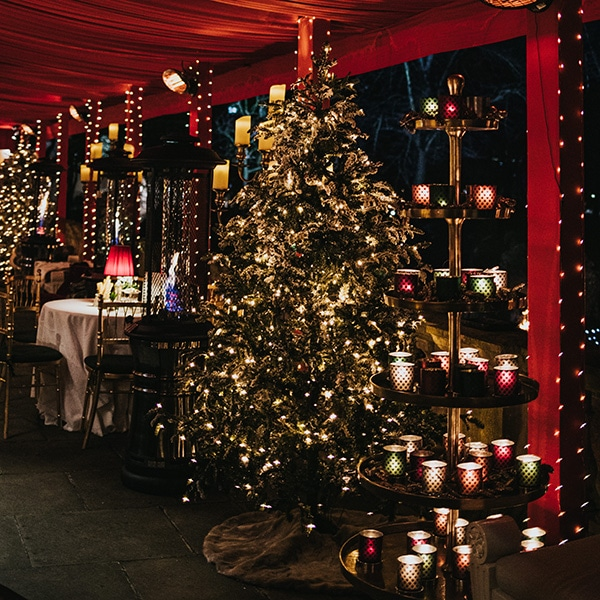 Twilight Trees have an extensive range of faux LED trees for hire and are renowned for their exceptional quality. Click to find out more.