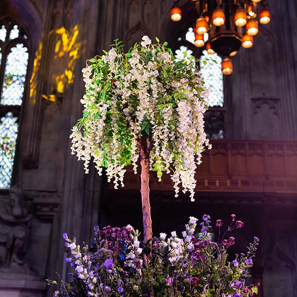 Hire wisteria trees for events