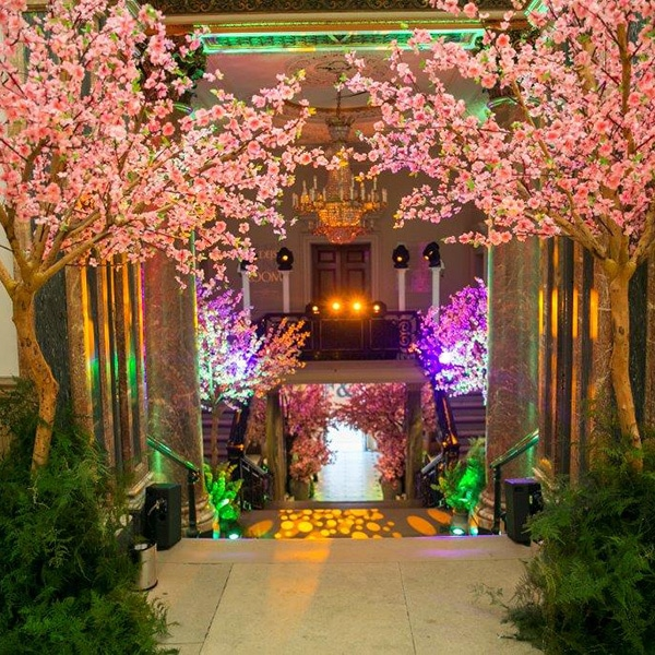 Hire pink japanese blossom trees for events