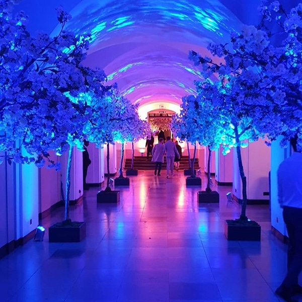 Hire white apple blossom trees for events