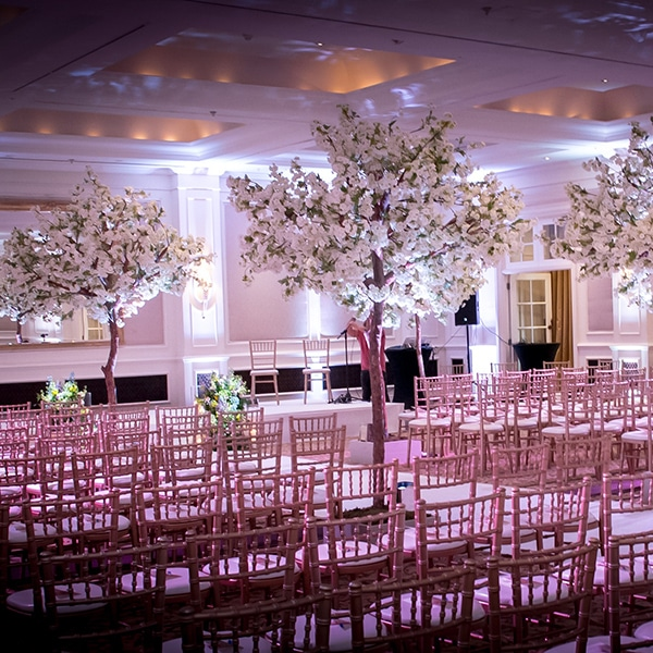 Wedding ceremonies - hire white apple blossom trees