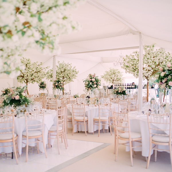 Hire white apple blossom wedding trees