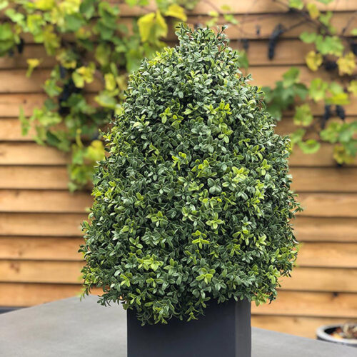 Boxus Cone faux topiary to buy or hire from Twilight Living where you can bring Twilight Tree magic home. From artificial trees to our amazing biophilia design products. Click to find out more.