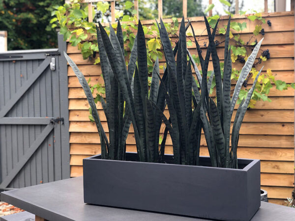 Faux Agave Plant - group