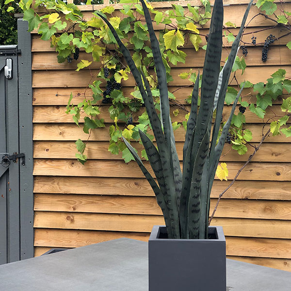 Faux Agave Plant to buy or hire from Twilight Living where you can bring Twilight Tree magic home. From artificial trees to our amazing biophilia design products. Click to find out more.