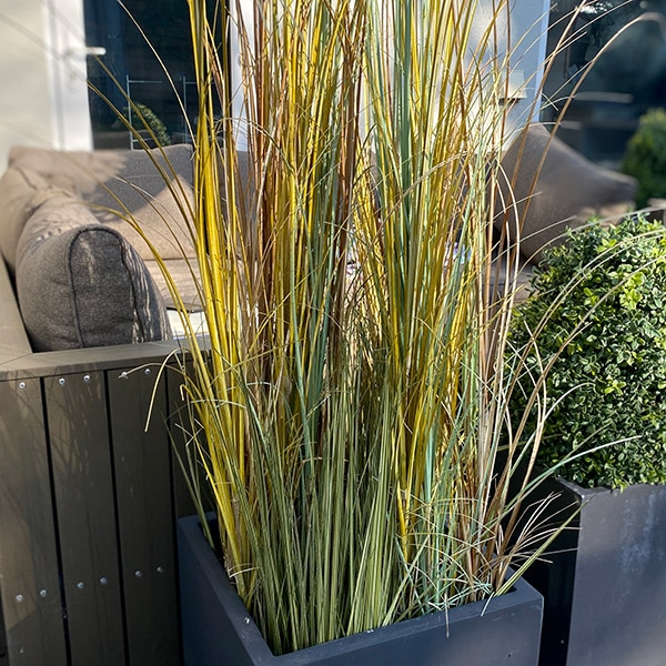 Faux tall grass to buy or hire from Twilight Living where you can bring Twilight Tree magic home. From artificial trees to our amazing biophilia design products. Click to find out more.