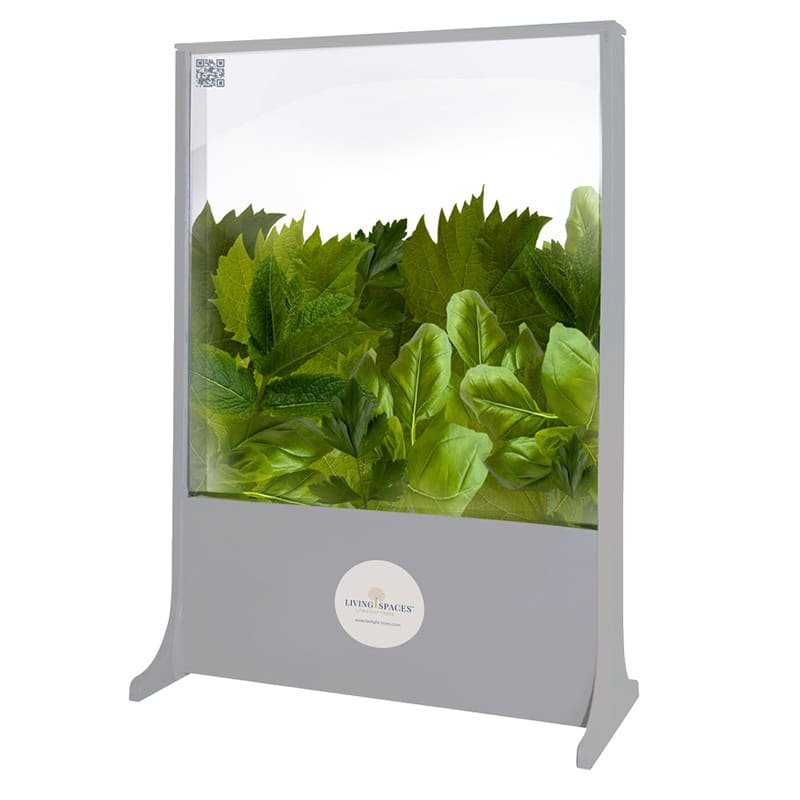 Basil, Mint & Vine biophilic design glass screen for the workplace or home from Twilight Trees. Click to view our stunning privacy screens and room dividers.