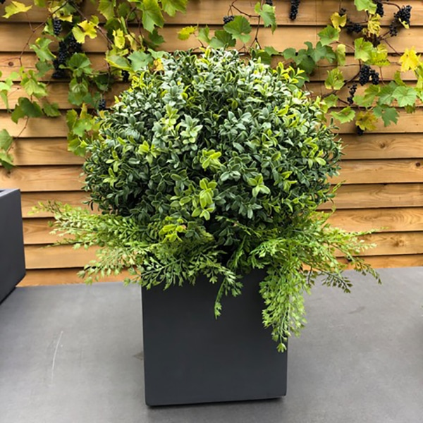 Faux topiary boxus ball to buy or hire from Twilight Living where you can bring Twilight Tree magic home. From artificial trees to our amazing biophilia design products. Click to find out more.