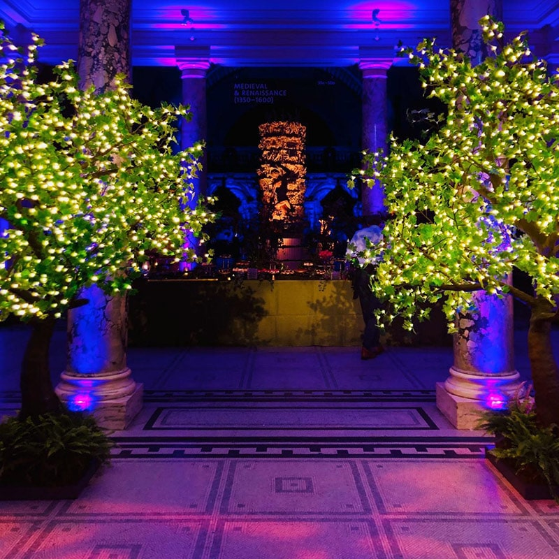 Hire LED Maples Trees